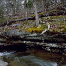 Piny Creek Ravine
