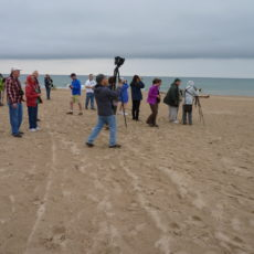Fall shorebirds at Waukegan Beach with Lake Cook Audubon field trip