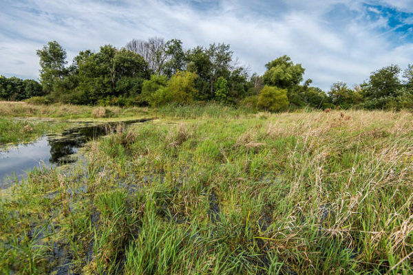 Augustana wetland Photo by Steve Hager