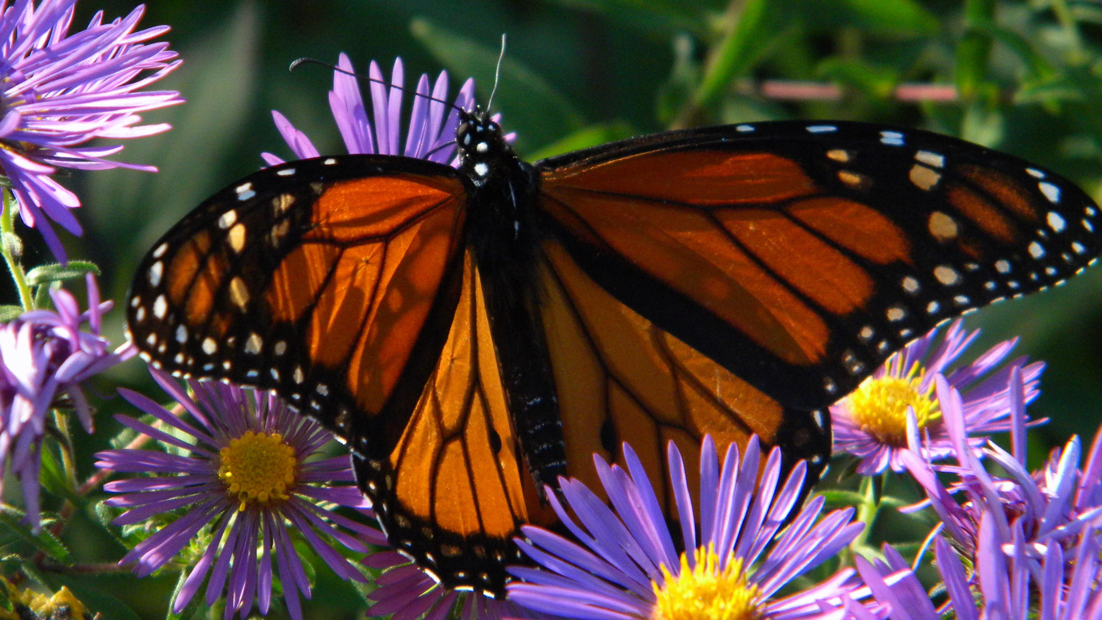 Bird and Butterfly Sanctuary Certification - Illinois Audubon Society