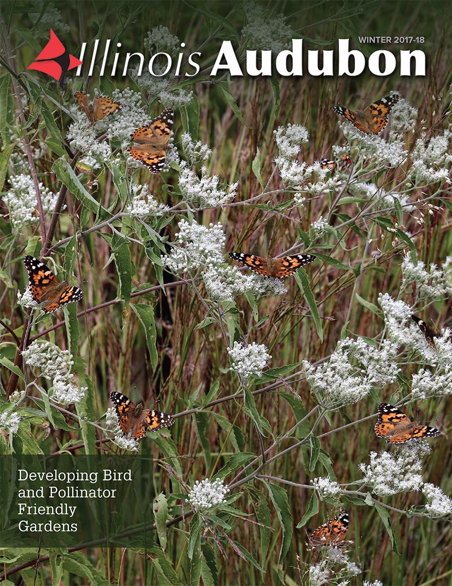 Think Spring with Winter Magazine - Illinois Audubon Society